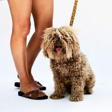 Load image into Gallery viewer, Kip & Co - Tarzan Dog Lead Large