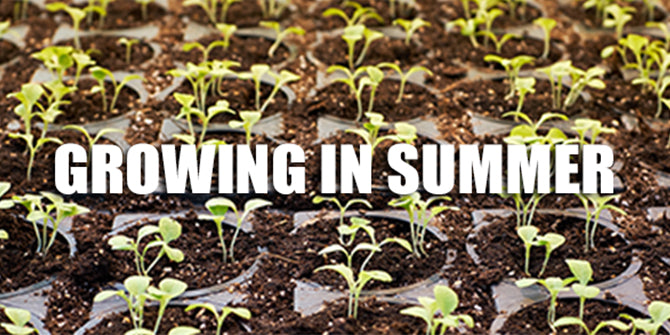 10 Tips For Growing In The Summer!