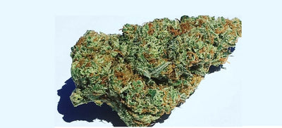 Bruce Banner Strain - Everything you need to know & more!