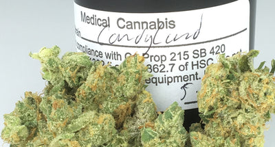 Candyland Cannabis Strain (Everything you need to know and more!)