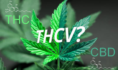 What is THCV Strain – 8 Things You Need to Know in 2019!