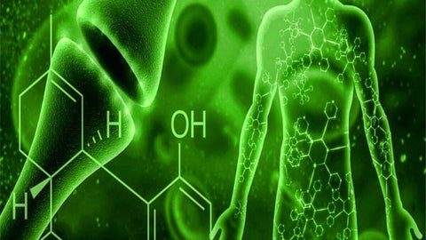 The Importance of Cannabinoid Receptors