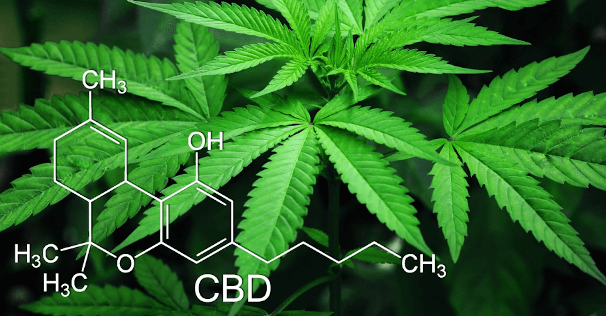 Hemp & CBD Benefits For Arthritis