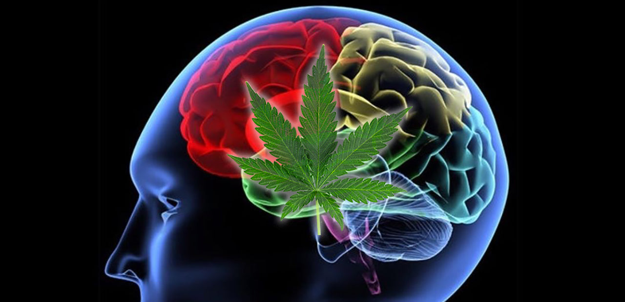 CBD and Parkinson's – How It Can Help, What We Know in 2019!