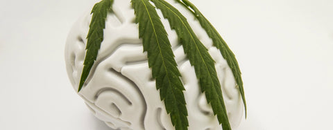 Cannabis as Treatment for Brain Cancer