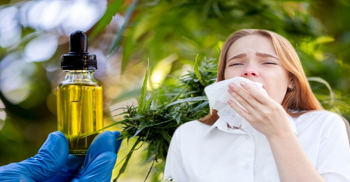 Taking cbd for allergies - 3 brands you need to try!
