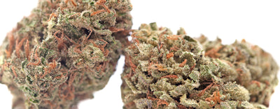 Chemdog Strain Review - Everything You Need to Know & More!