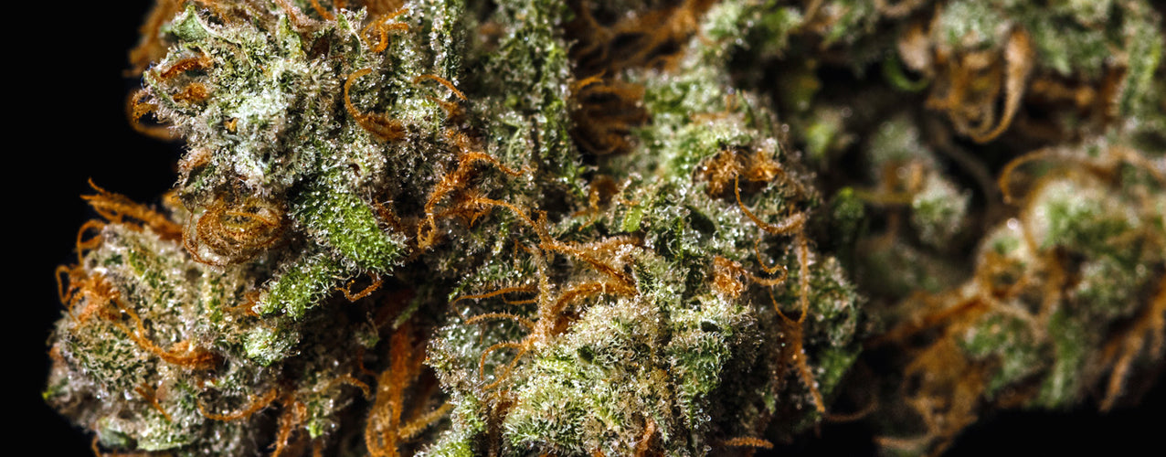 Larry OG Strain Review - Everything You Need to Know & More!
