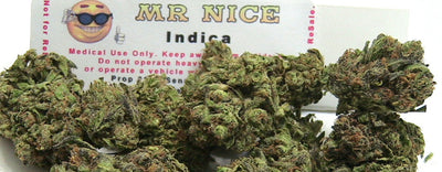 Mr Nice Guy Strain Review - Everything You Need to Know & More!