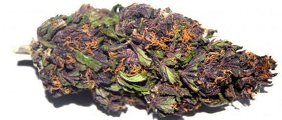 Purple Haze Cannabis Strain (Everything You Need to Know & More!)