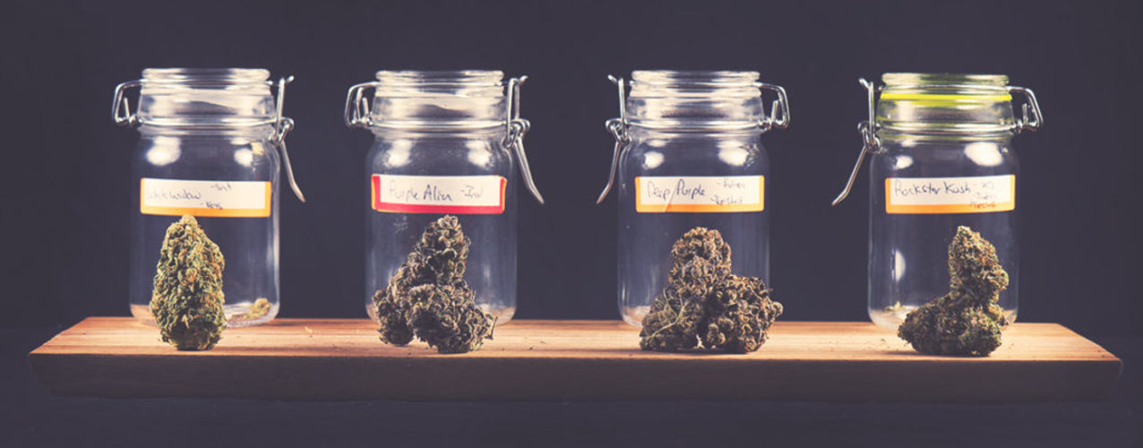 10 Best Stash Jars in World Right Now - The Ultimate Guide!