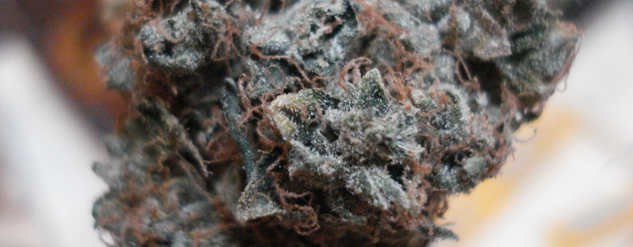 What is Top Shelf Weed & 3 Essential Tips to Help You Buy It!