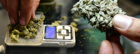 11 Best Weed Scales in 2019 - The Ultimate Guide!