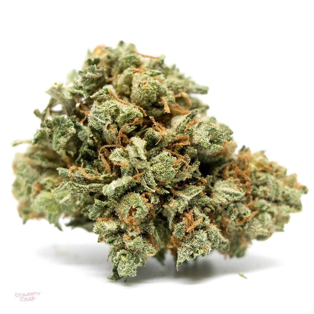 Strawberry Cough Bud: Image Credits: Buy Me Weed Online