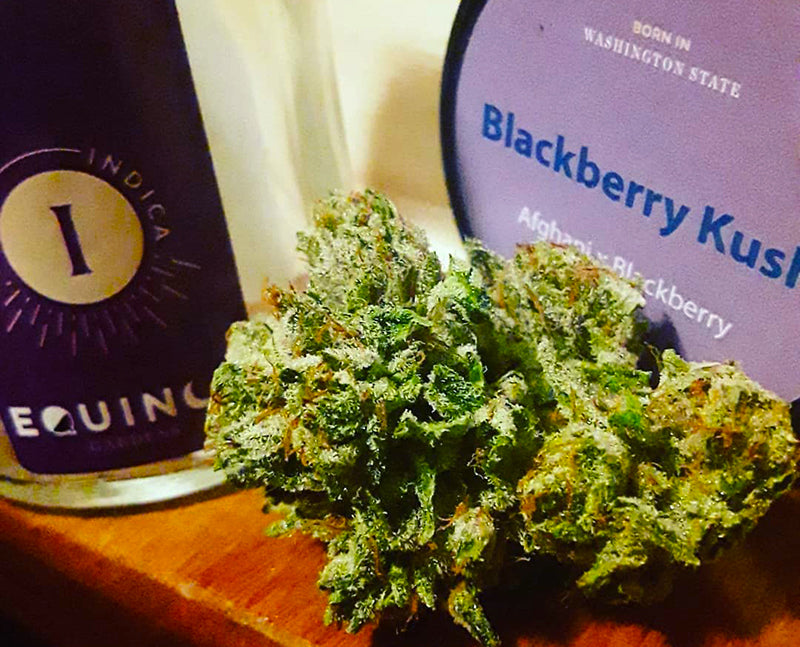 Blackberry Kush cannabis buds and dispensary packaging, image from Equinox_Wa_Gardens on Instagram