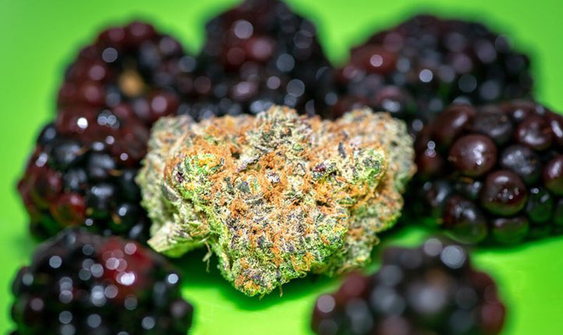 Blackberry Kush and actual blackberries, image from from Nirvana Center Dispensary on Instagram