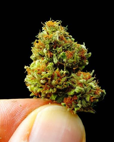 Chemdawg Strain Review - Everything You Need to Know & More! – Weed