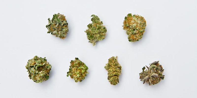 Nugs or buds  of different types of marijuana strains from Green Man Delivery.com