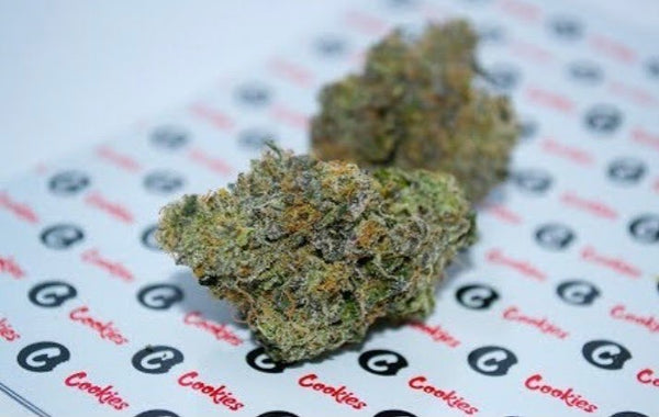 Biscotti strain review - Everything You Need to Know & More! – Weed