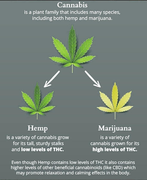cbd cannabis marijuana hemp