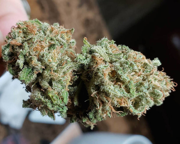 dream queen nug marijuana
