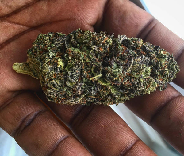 Gelato Weed - Everything you need to know and more! – Weed