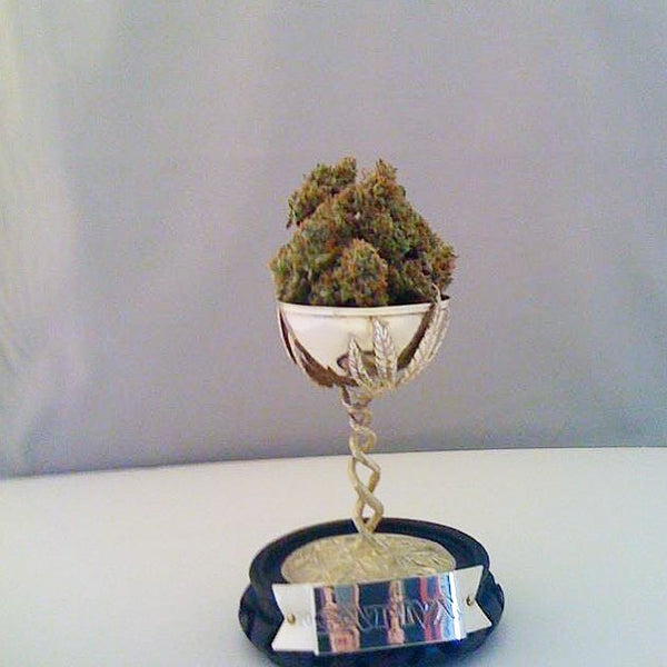 moonshine haze cannabis winner