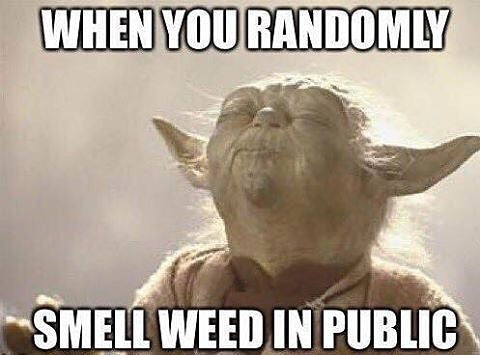 yoda smell weed