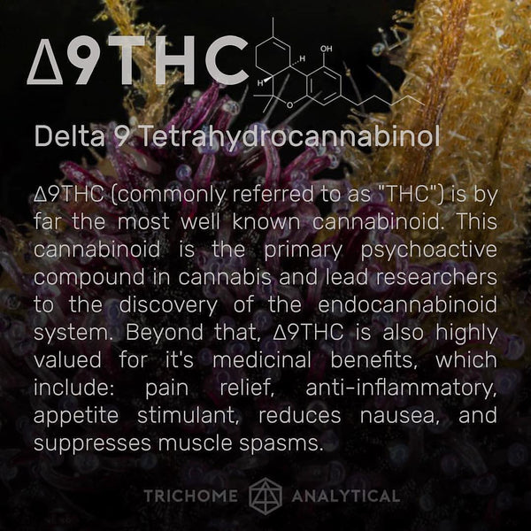 thc cannibinoid information