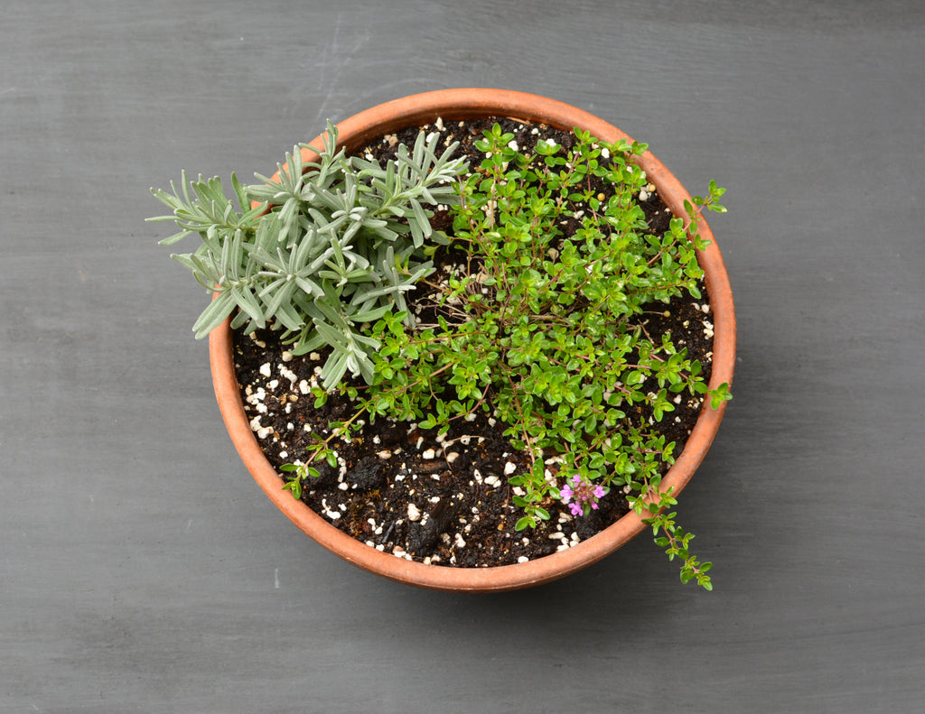 Aromatic mediterranean bowl planter
