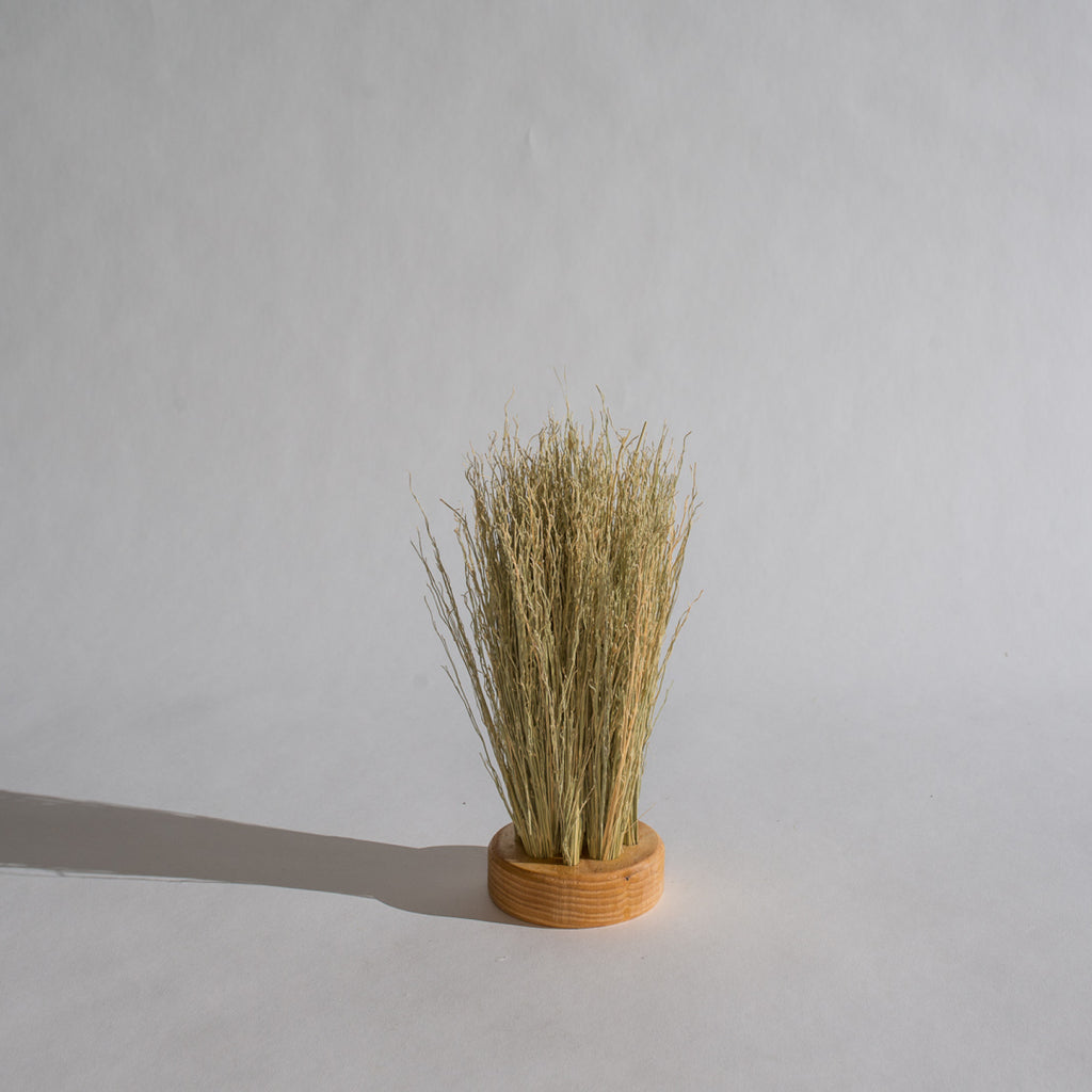 Puck Brush / Natural Broomcorn