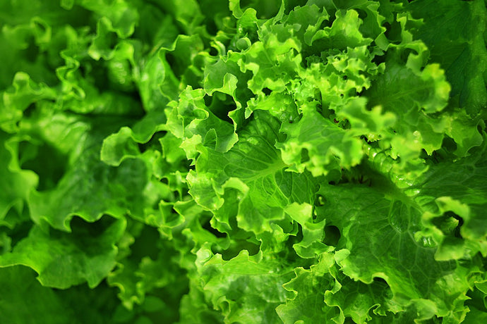 4 Reasons to Eat Leafy Greens