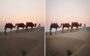 Before and after of @jordhammond Lightroom Desert Preset - Man walking camels across sand dunes at sunrise, Abu Dhabi, UAE.