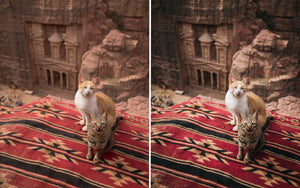 Before and after of @jordhammond Lightroom Desert Preset - 2 cats on a rug in front of Petra, Jordan.