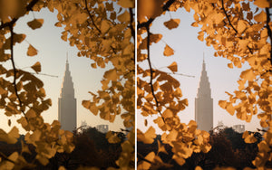 Before and after of @jordhammond Lightroom Urban Preset -Tokyo skyscraper surrounded by autumn leaves, Tokyo, Japan.