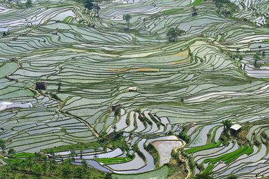 Striated green farmland
