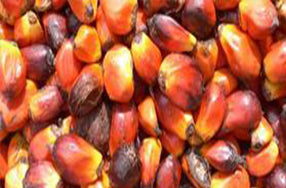 array of orange, red, brown and yellow corn seeds