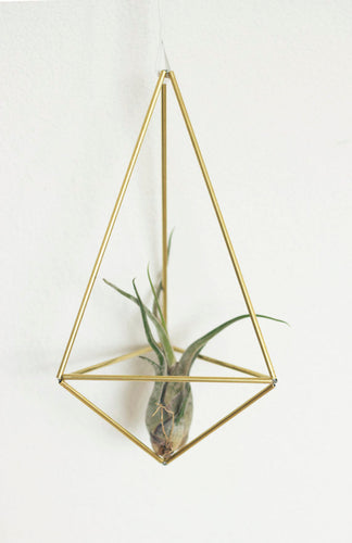 Himmeli DROP: air plant holder, indoor planter