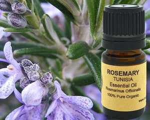 Rosemary Essential Oil (Organic) 5 ml, 10 ml or 15