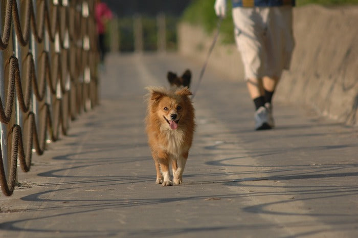 Walking your dog daily boosts YOUR health… Let the heeling begin!