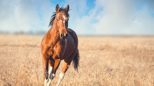 Glucosamine for Horses: What is Glucosamine and Does It Work?