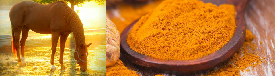 Turmeric for Horses