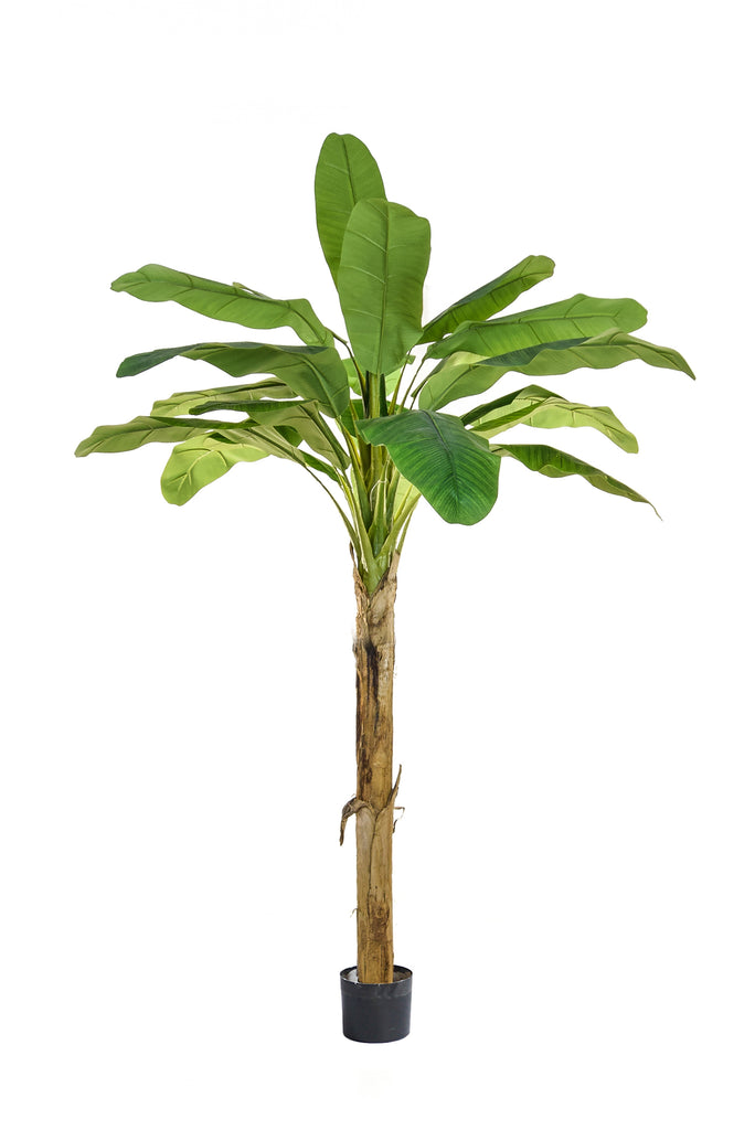 180cm FAUX BANANA PALM WITH POT