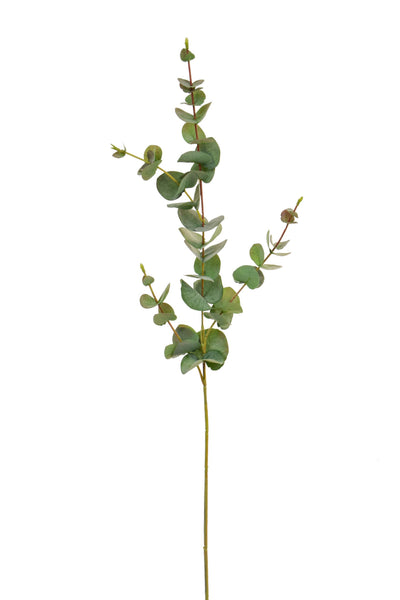 Green Eucalyptus Stem