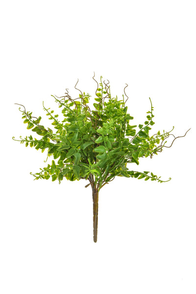 Mini Fern Bush