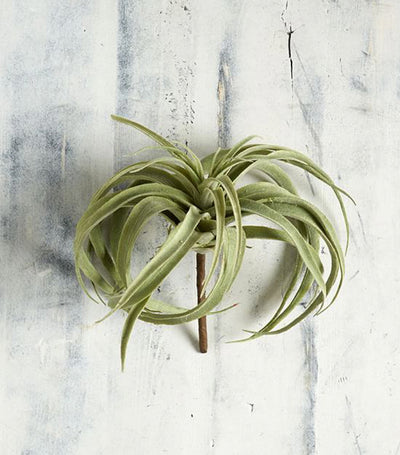 Pottery Barn Faux Tillandsia Succulent Stem