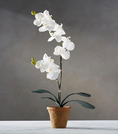 Pottery Barn Faux Potted Orchid