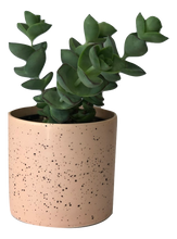 Load image into Gallery viewer, Small Succulent & Pot