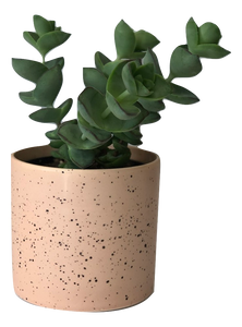 Small Succulent & Pot
