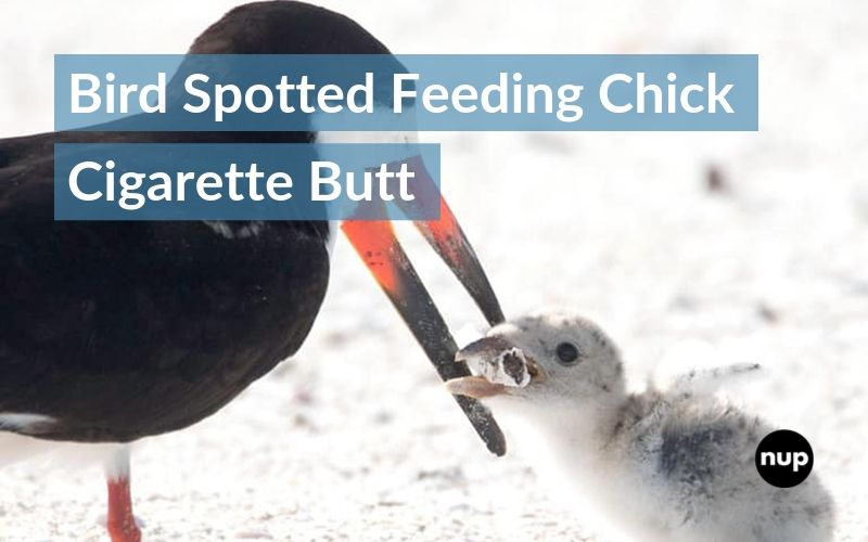 Bird spotted feeding chick cigarette butt in 'devastating' picture